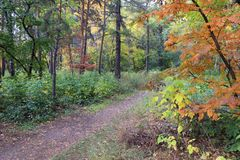 Autumn landscape - path in a mixed forest Stock Photo