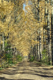 Autumn landscape. Pathway through the autumn forest Royalty Free Stock Photography