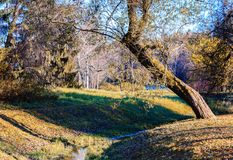 Autumn landscape in Pavlovsk Stock Image