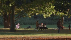 Autumn Landscape Of People In Berlin City Park video d archivio