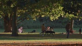 Autumn Landscape Of People In en Berlin City Park lager videofilmer