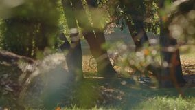 Autumn Landscape With People In un parc Berlin de ville clips vidéos