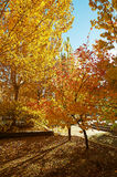 The autumn landscape Royalty Free Stock Images