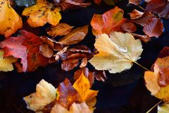 Autumn landscape in Plitvice Lakes National Park, Croatia‎ Royalty Free Stock Photo