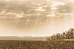 Autumn landscape with plowed field and acacia trees, photo toned Royalty Free Stock Images