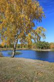 Autumn landscape - pond in the park Royalty Free Stock Images