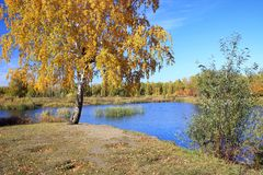 Autumn landscape - pond in the park Royalty Free Stock Photos