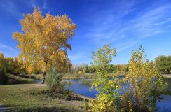 Autumn landscape - pond in the park Royalty Free Stock Photography