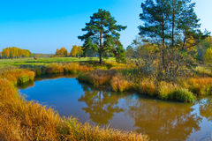 Autumn landscape with a pond Stock Photos