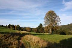 Autumn Landscape por una tarde Sun con un árbol solitario, parque nacional de Sumava, República Checa, Europa Imágenes de archivo libres de regalías