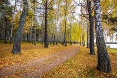 Autumn Landscape Région de la Sibérie occidentale, Novosibirsk, Russie photographie stock