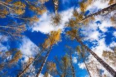 Autumn Landscape Région de la Sibérie occidentale, Novosibirsk, Russie images libres de droits