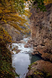 Autumn landscape of rapid mountain river. In canyon and frame of yellow trees Royalty Free Stock Photo