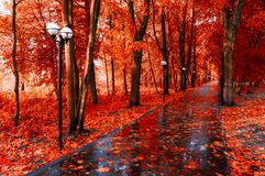 Autumn landscape. Red autumn trees and fallen autumn leaves on the wet footpath in park alley after rain. Creative filter applied stock images