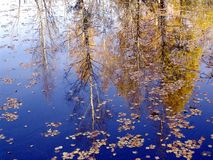 Autumn landscape. reflect Royalty Free Stock Image