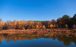 Autumn landscape with reflection in the river. Stock Photos
