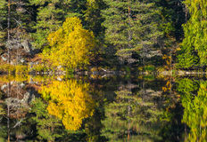 Autumn landscape with reflective calm lake Royalty Free Stock Photo