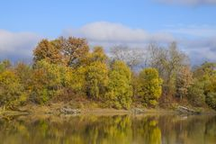 Autumn landscape. River and river bank with yellow trees. Willow and poplar on the river bank. Autumn landscape. River and river bank with yellow trees. Willow Royalty Free Stock Photography