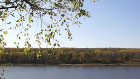 Autumn landscape with river and birch branch. Beautiful autumn landscape with river and birch branch stock footage