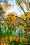 Autumn landscape of a river Royalty Free Stock Image