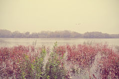 Autumn landscape on a river, on a rainy, foggy day; retro Royalty Free Stock Images