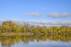 Autumn landscape. River and river bank with yellow trees. Willow and poplar on the river bank. Autumn landscape. River and river bank with yellow trees. Willow Stock Photo