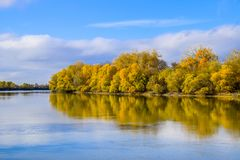 Autumn landscape. River and river bank with yellow trees. Willow and poplar on the river bank. Autumn landscape. River and river bank with yellow trees. Willow Stock Photos