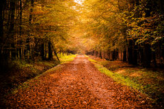 Autumn landscape with road. And beautiful colored trees stock image