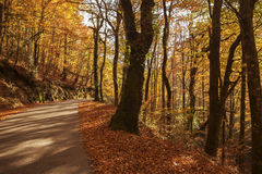 Autumn. Landscape with road and beautiful colored trees, in Geres, portuguese national Park royalty free stock photos