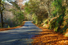 Autumn. Landscape with road and beautiful colored trees, in Geres, portuguese national Park stock image