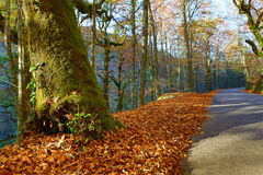 Autumn. Landscape with road and beautiful colored trees, in Geres, portuguese national Park stock photos