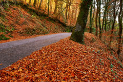 Autumn. Landscape with road and beautiful colored trees, in Geres, portuguese national Park royalty free stock photo