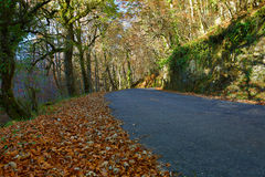 Autumn. Landscape with road and beautiful colored trees, in Geres, portuguese national Park royalty free stock photography