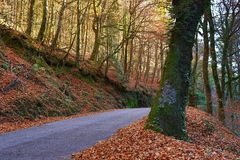 Autumn. Landscape with road and beautiful colored trees, in Geres, portuguese national Park stock photography