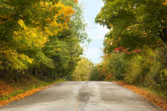 Autumn landscape with road and beautiful trees. Autumn landscape with road and beautiful colored trees royalty free stock photos