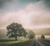 Autumn Landscape. Road in Fog. Trees Silhouettes. Stock Image