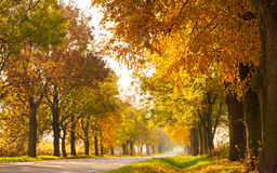 Autumn landscape with road and gold trees along. Autumn rural landscape with country road and gold trees along - sunny beautiful day royalty free stock photo