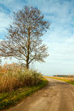 Autumn landscape with a road. And tree Stock Photography