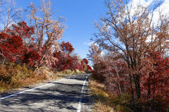 Autumn landscape and road. Stock Photography