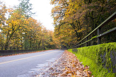 Autumn landscape with road and tunnel in the forest Royalty Free Stock Photography