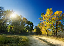 Autumn Landscape. road Royalty Free Stock Photography