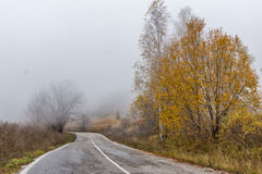 Autumn landscape with road and yellow leafs of Birch, Vitosha Mountain, Bulgaria Royalty Free Stock Images