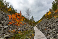 Autumn landscape with rock in Lapland, Finland. Isokuru royalty free stock images