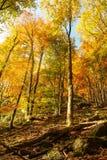Autumn landscape with a rock Stock Images