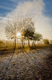 Autumn landscape from Romania. Autumn landscape of a tree from Romania. The sun rays go trough the tree branches and trough the smoke Royalty Free Stock Photo