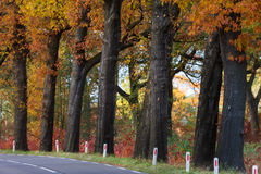Autumn landscape with rural highway Stock Photo
