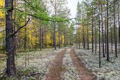 Autumn landscape Russian forest tundra Stock Images