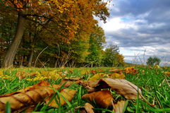 Colors of autumn in the forest. Landscape with rusty colored leaves. Autumn background stock image