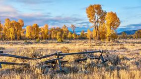 A beautiful autumn morning in Jackson Hole, Wyoming, with golden fall foliage. stock photos