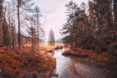 Autumn landscape scene at the lake arber. Bavaria Royalty Free Stock Images